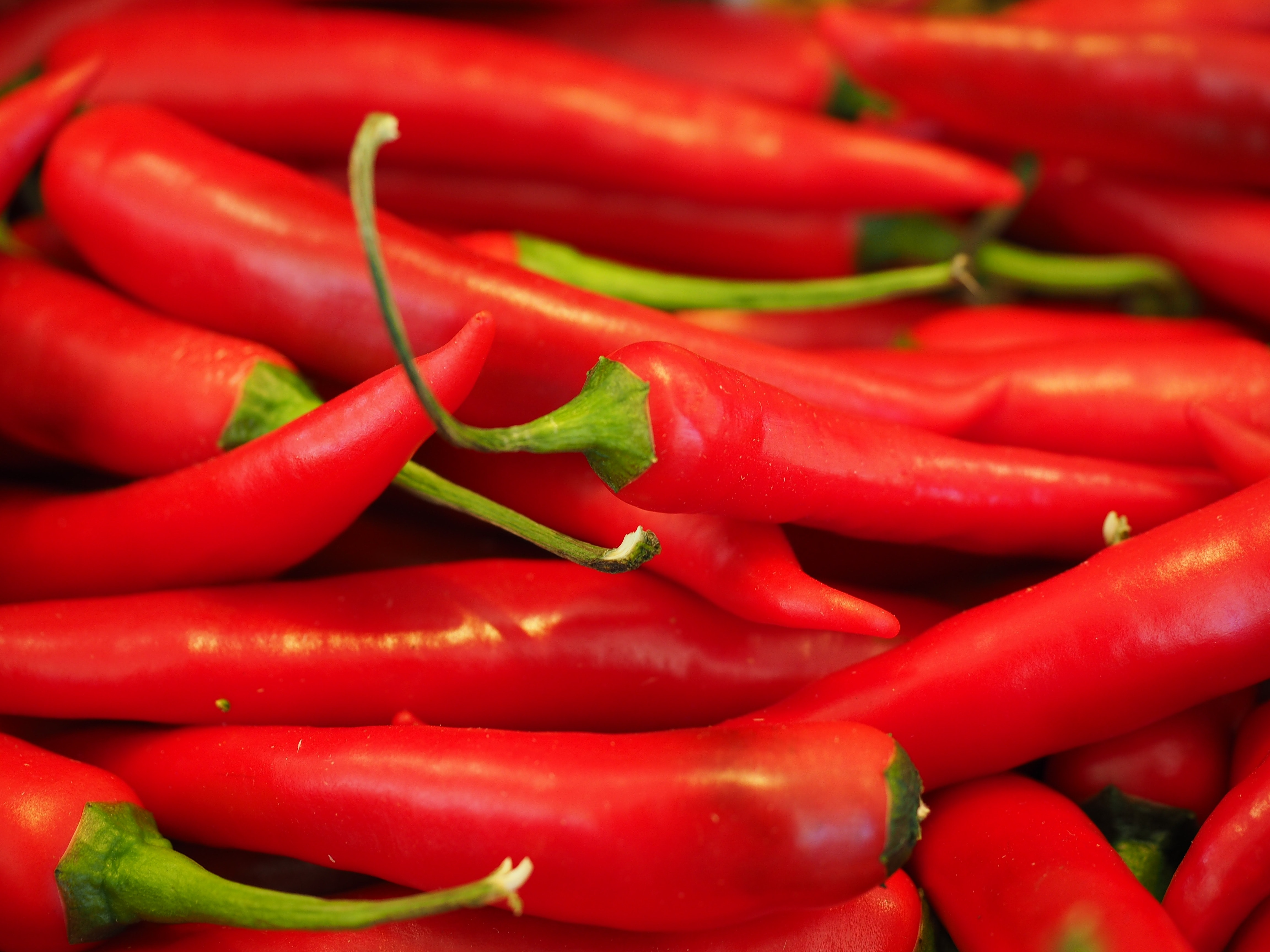 chili-chili-peppers-chilli-pepper-42259