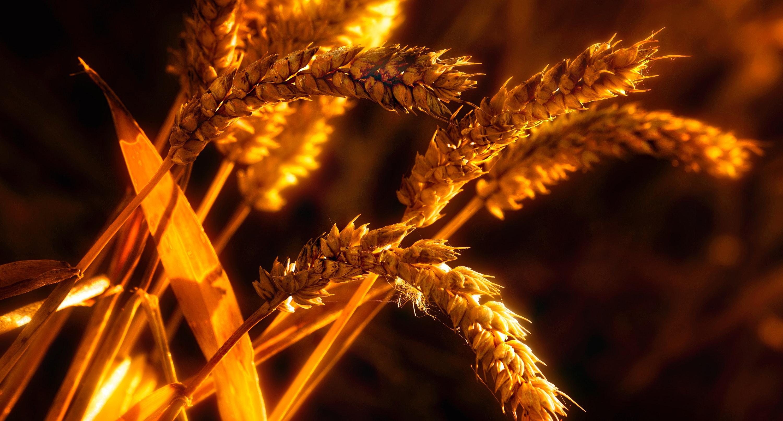 agriculture-blur-blurred-background-1579426