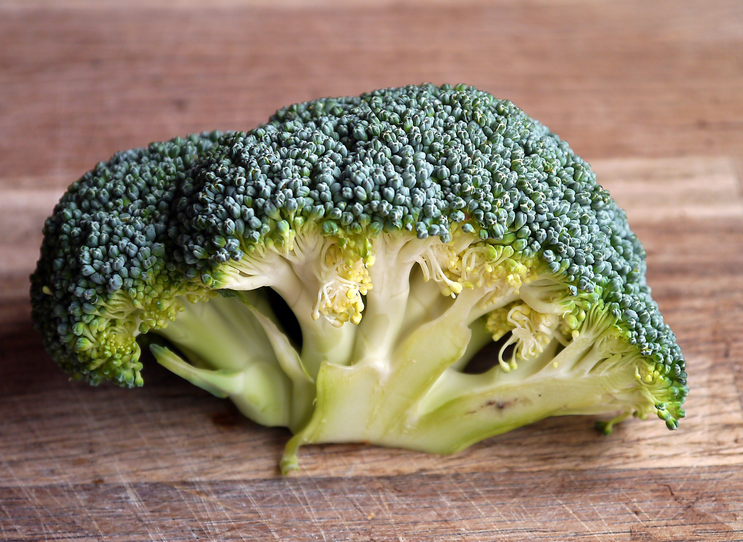 broccoli-food-fresh-47347